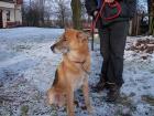Bezpańskie i zagubione psy na terenie Pyskowic