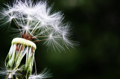Nowe prawo Unii Europejskiej w zakresie ochrony roślin
